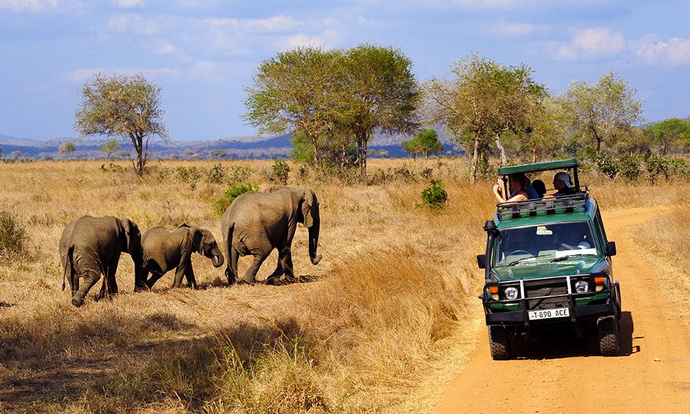 Bli med til Mikumi nasjonalpark – et lite mini-Serengeti. Foto: Ronny Frimann