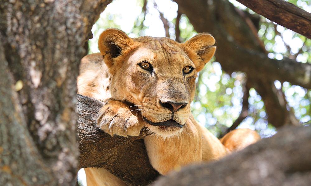 Etter at vi har besteget toppen av Afrika er det tid for safari og spennende dyremøter. Foto: Runar Larsen