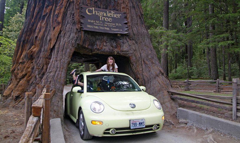 4. Redwood-skogen