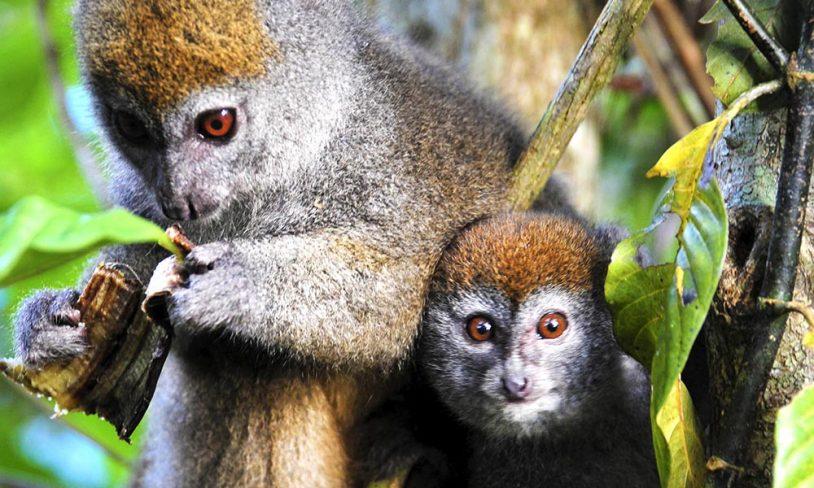 3. Madagaskar