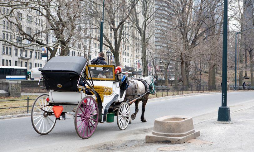 10. Hest og kjerre, New York