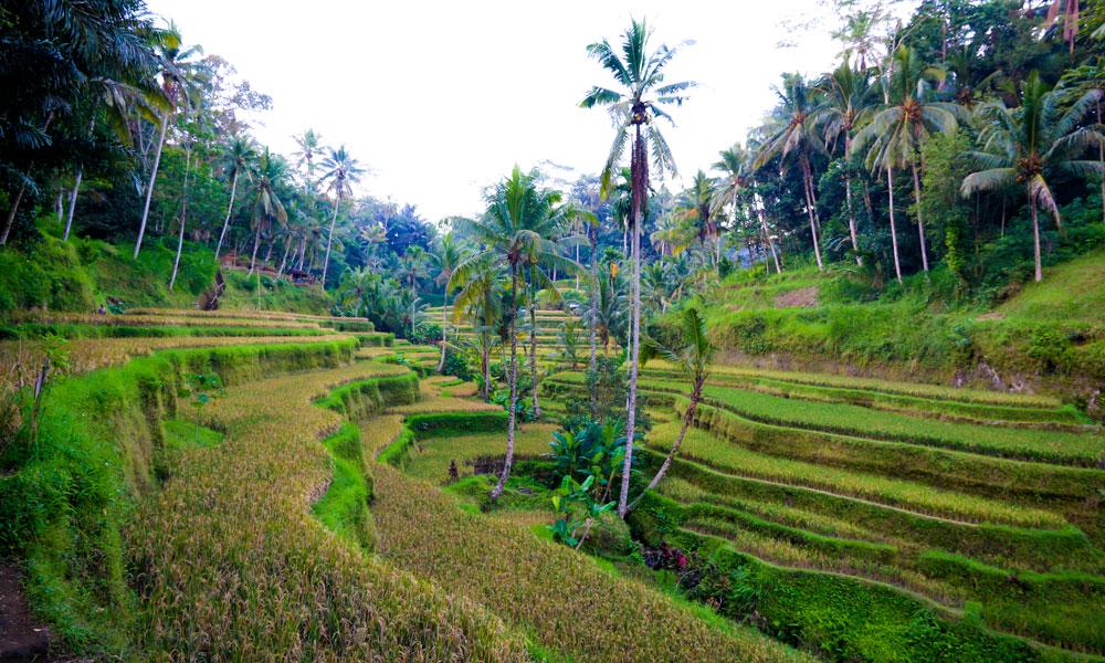 Det er aldri langt til den grønnere siden av Bali, med mange muligheter for fine fotturer og morsomme naturopplevelser. Foto: Preben Danielsen