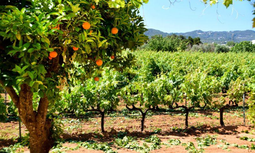 3. Økologisk vin og olivenolje