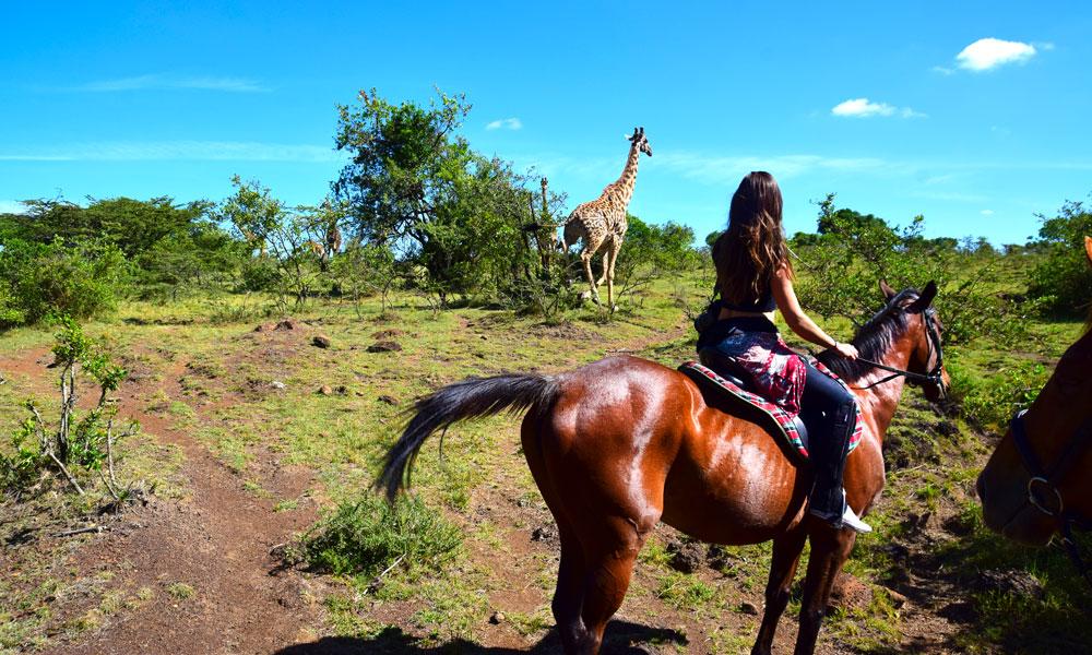 På safari fra hesteryggen er det heldigvis sjelden man møter en løve. Istedet møter man snille dyr som sjiraffer og geiter. Foto: Mari Bareksten
