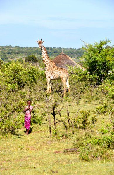 Masai Mara byr på mektige dyreopplevelser og spennende menneskemøter. Rett og slett en eventyrlig reise. Foto: Mari Bareksten