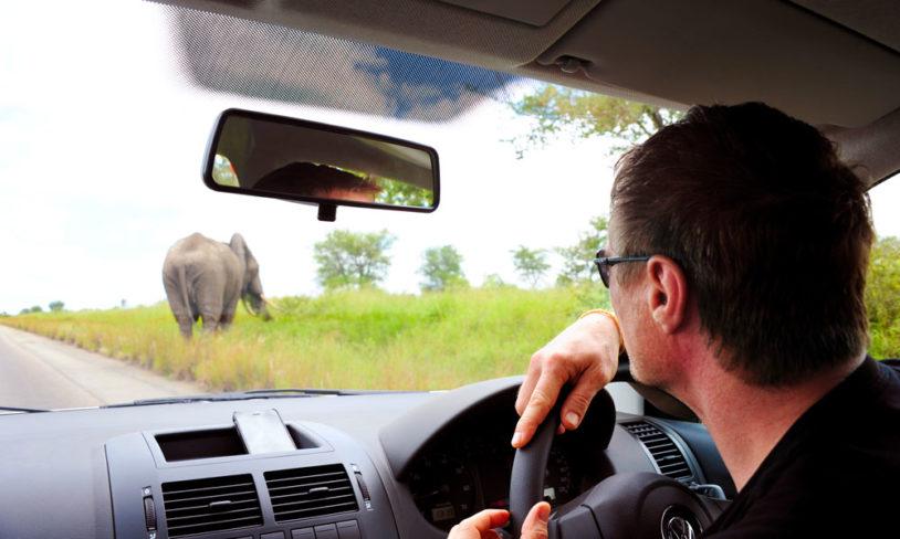 10. Kjør-deg-selv-safari
