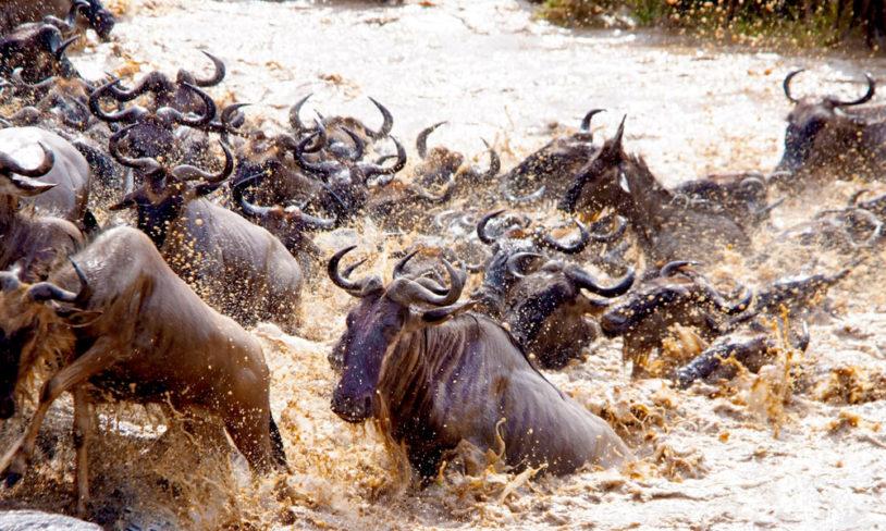 6. Verdens største dyrevandring