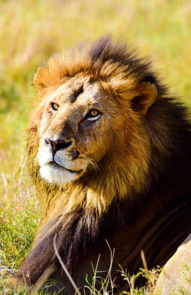 For å beskytte dyrenes velferd, ligger det ingen overnattingslodger i selve nasjonalparken. Foto: Mari Bareksten