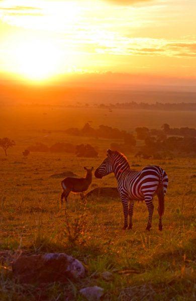 Det er tidlig om morgenen dyrene er mest aktive, så det lønner seg å stå opp tidlig og dra på safari. Foto: Mari Bareksten
