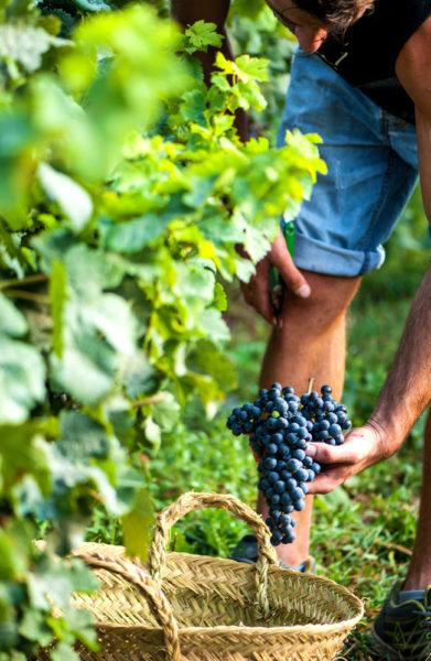 Siden åpningen i 2004 har Binifadet vokst til å bli Menorcas støste vinprodusent. De produserer hele 100.000 flasker i året. Foto: Mari Bareksten