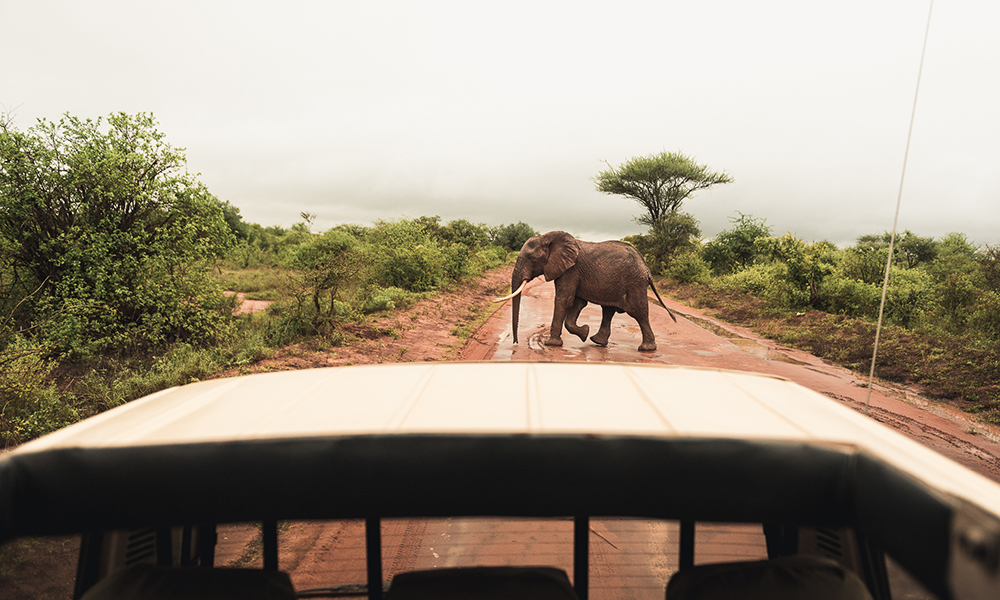 01 - Tsavo West, utsjekk og elefant