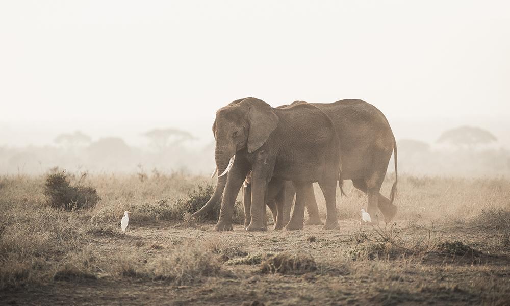 Elefanter i Amboseli. Foto: Stian Klo