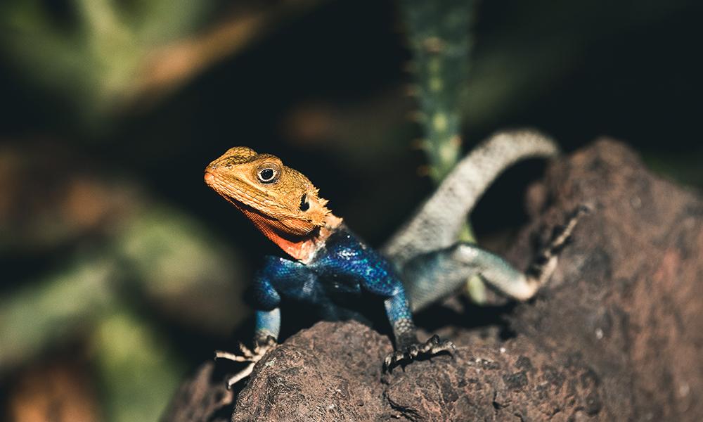 Salamandere fikk vi hilst på mens vi ventet tålmodig på utviklingen av været. Foto: Stian Klo