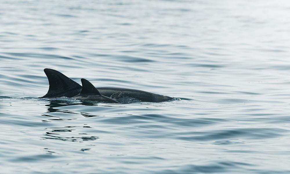 Delfiner i sikte! Foto: Stian Klo