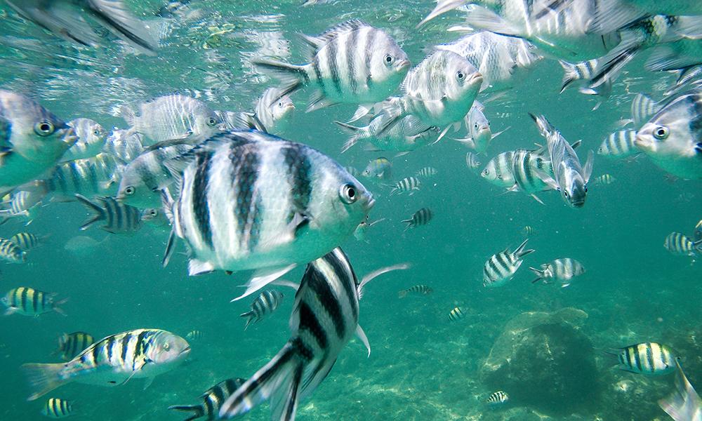 Under vann utenfor Malindi. Foto: Stian Klo