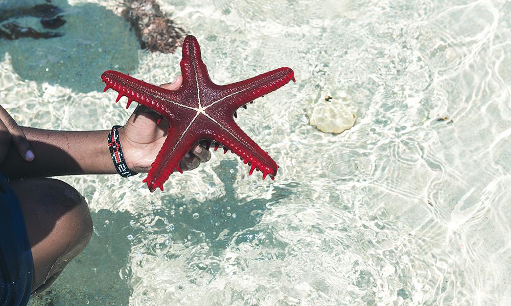 Vakker sjøstjerne. Foto: Stian Klo