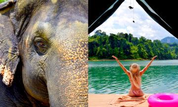 Mange tusen elefanter jobber under dårlige forhold i turistindustrien i Thailand og resten av Asia. På Elephant Hills nyter elefantene heller det gode liv. Foto: Mari Bareksten