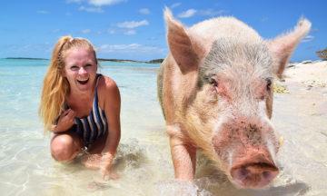 Strandløver med svinepels må tåle solsteiken, ellers kan de bli til bacon! Foto: Mari Bareksten