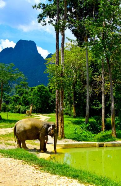 En elefant skal ikke ha stramme og korte lenker rundt føttene. Det slipper elefantene på Elephant Hills som gjerne tar seg en tur i gjørmebadet. Foto: Mari Bareksten