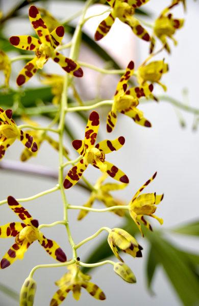 Til og med blomstene på Giraffe Manor er inspirert av det langhalsede dyret. Foto: Mari Bareksten