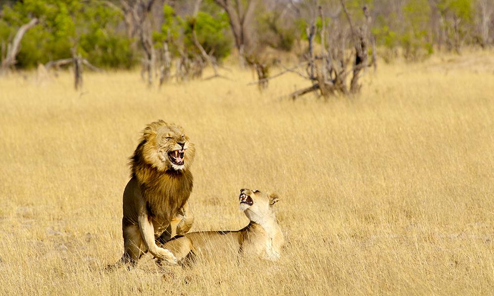 Få turister. Mange dyr. Zimbabwe byr på safariopplevelser i særklassen. Foto: Runar Larsen