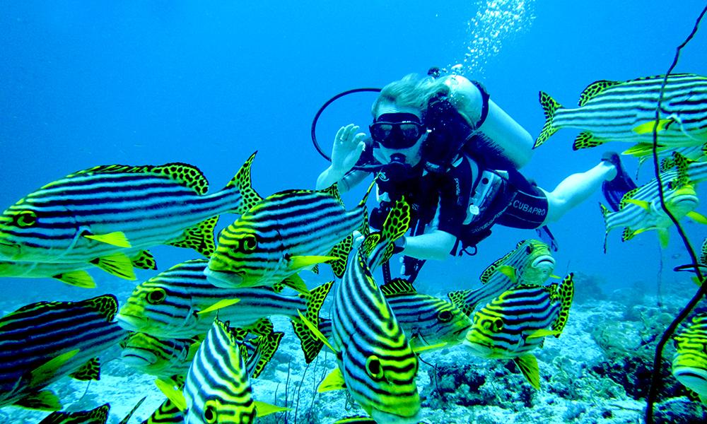 Male-atollen er ikke Maldivenes beste for dykking, men det er mer enn bra nok for noen avslappende turer under vann for å hilse på fargerike triggerfisk, hai, rokker og barracuda. Foto: Ronny Frimann