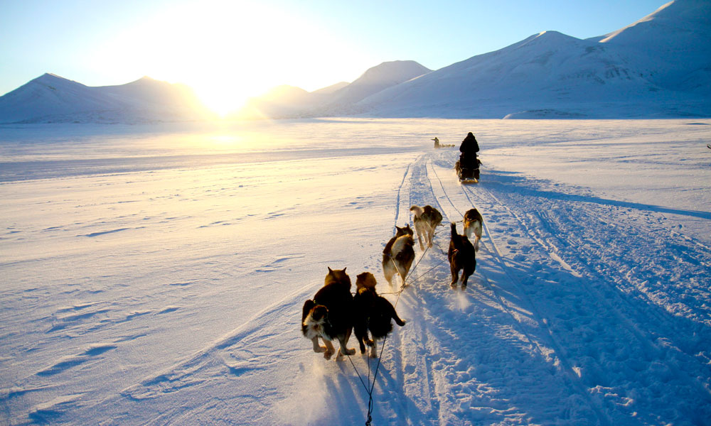 Trekkhundene trives best i kalde minusgrader. Hundekjøring over snøkledde vidder er en fantastisk måte å oppleve det golde men majestetiske landskapet på Svalbard. Foto: Runar Larsen