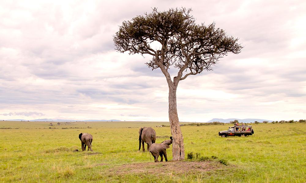 Masai Mara ble kåret til Afrikas ledende nasjonalpark i World Travel Awards 2017, og er et av verdens beste steder for utrolige dyreopplevelser. Foto: Ida Anett Danielsen