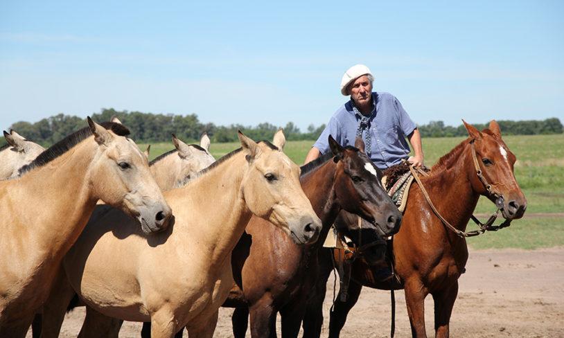7. Cowboylivet