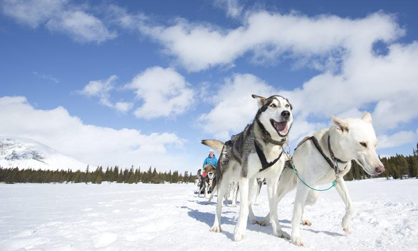 10 morsomme vinteraktiviteter uten ski på bena
