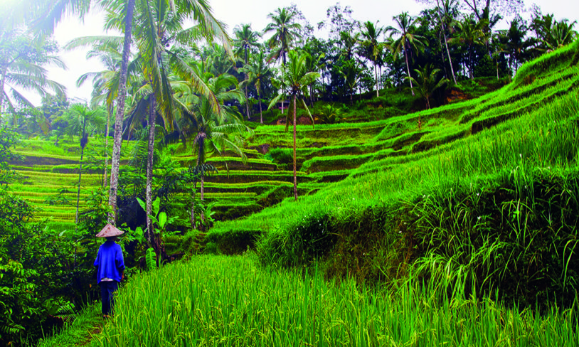 1. Bali