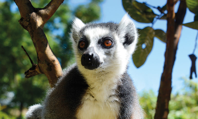6. Madagaskar