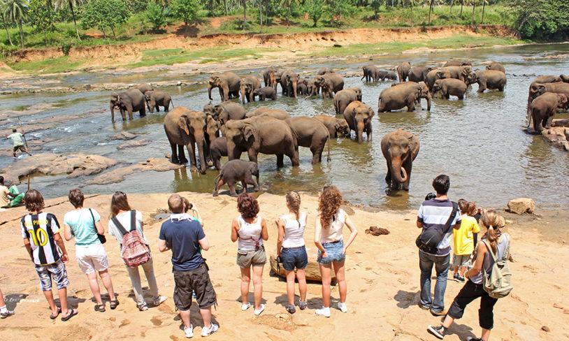 3. Elefanter