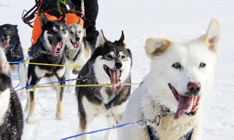 6. Hundesledetur, Beitostølen