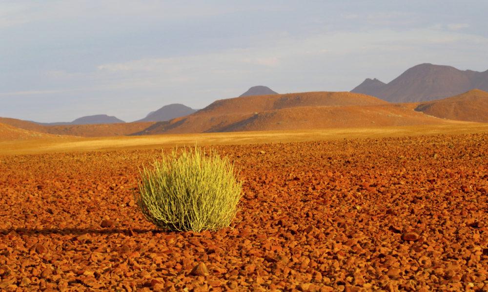 Ørkenlandskap