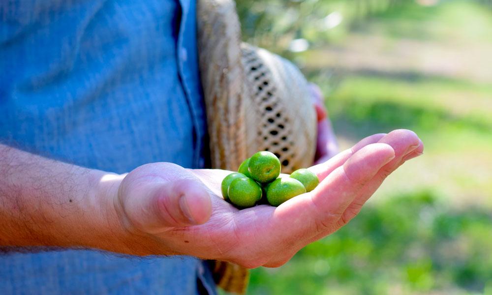 Hånd holder frem oliven.