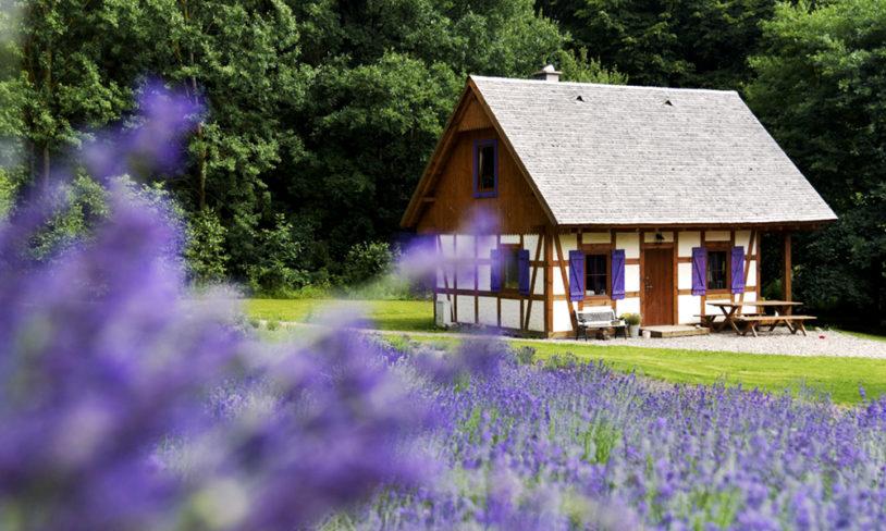 4. Lavendellykke