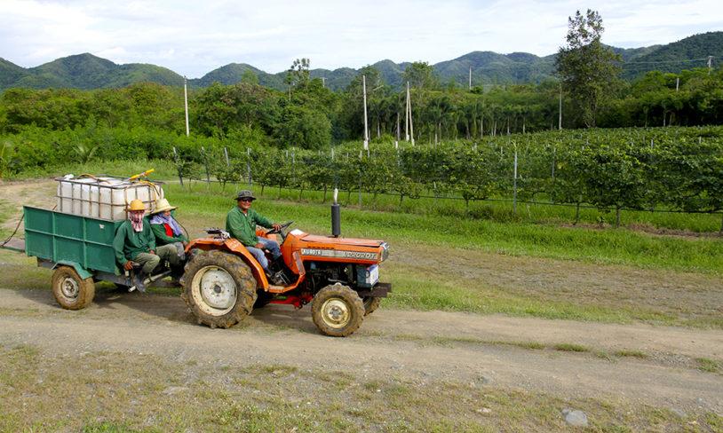 11. Eksotisk vingård