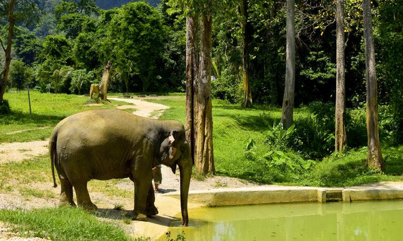 3. Ny snill elefantturisme