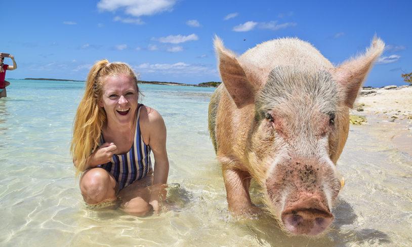 6. Svøm med griser
