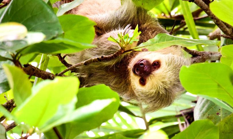 8 Pura vida i Costa Rica