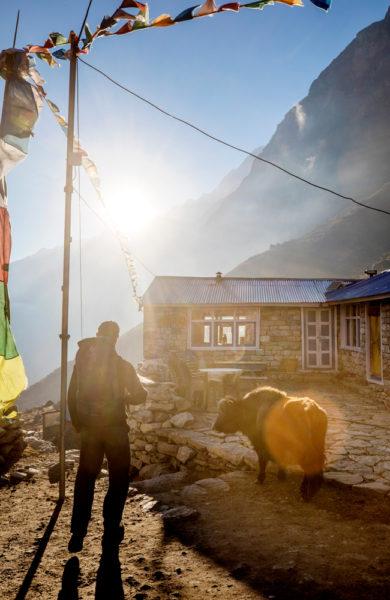 Nepalsk gård med jakokse