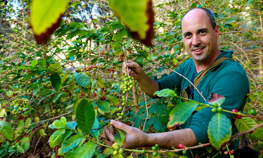 Manager Fernando Martinez (41) inspiserer kaffebønnene