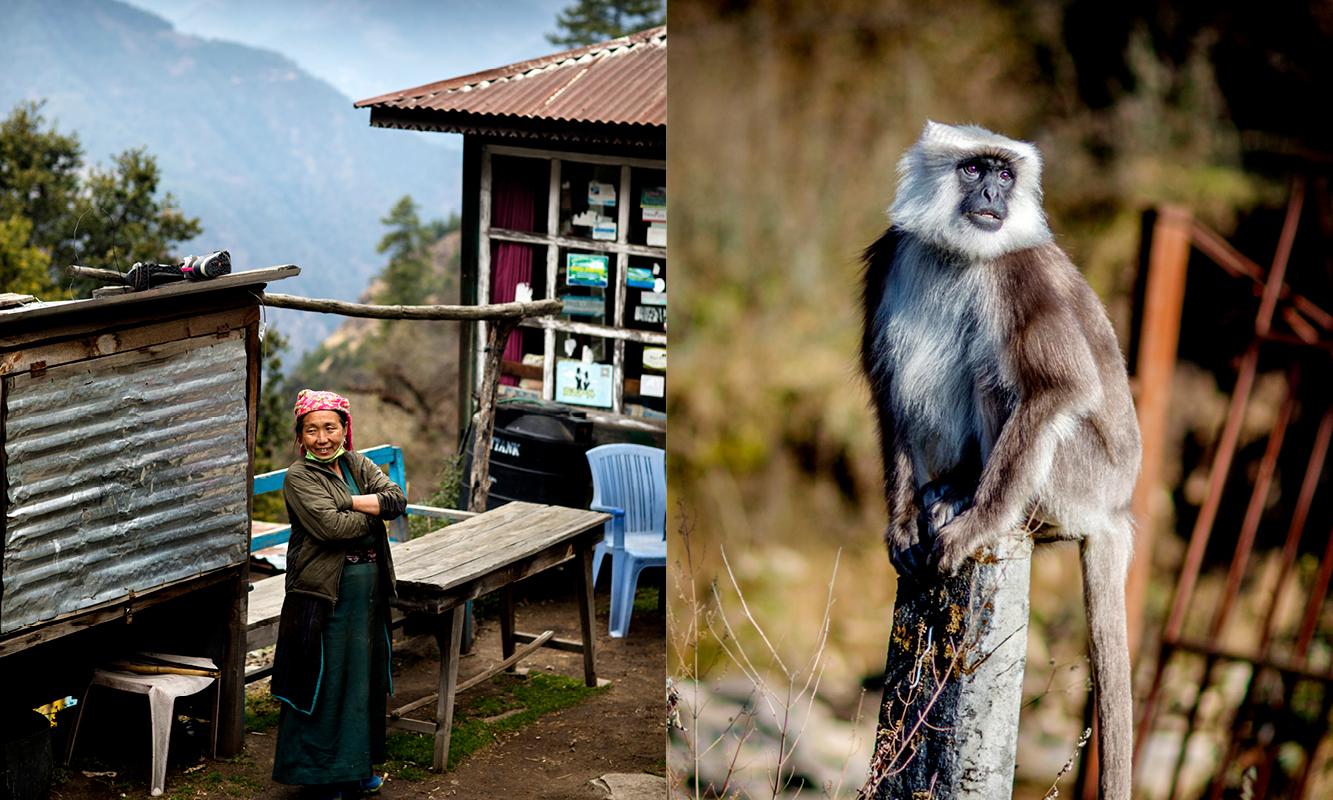 Nepalsk dame og grå langur